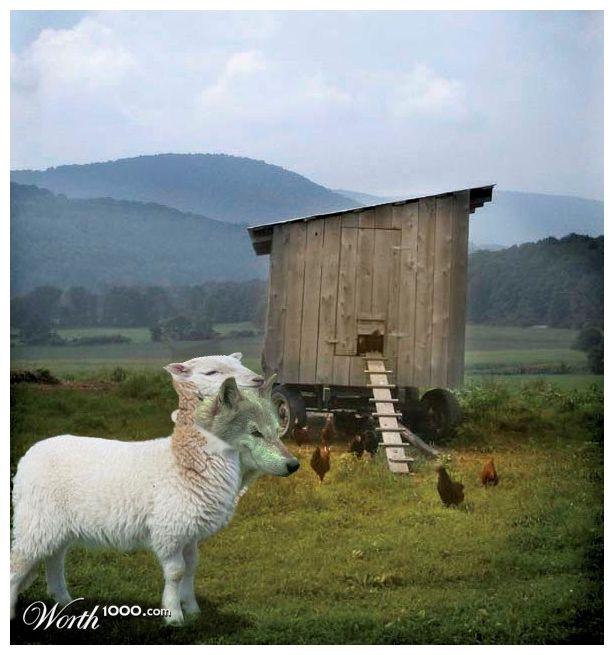 wolf-guarding-henhouse