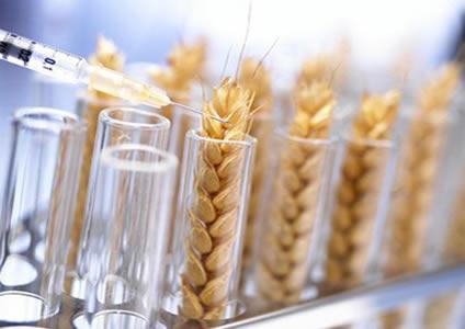 wheat_modified